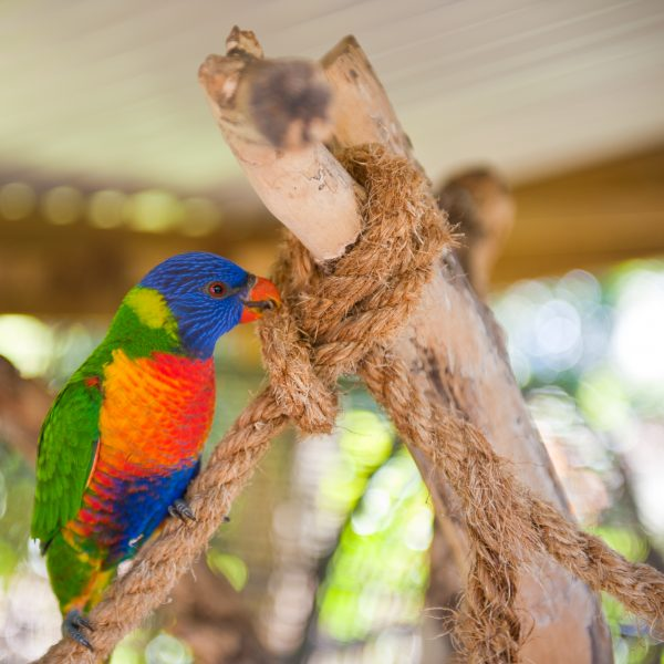 The_Parrot_Place_(10_of_53)