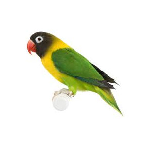 Online savings on pet supplies - The Parrot Place