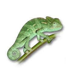 For your Reptile