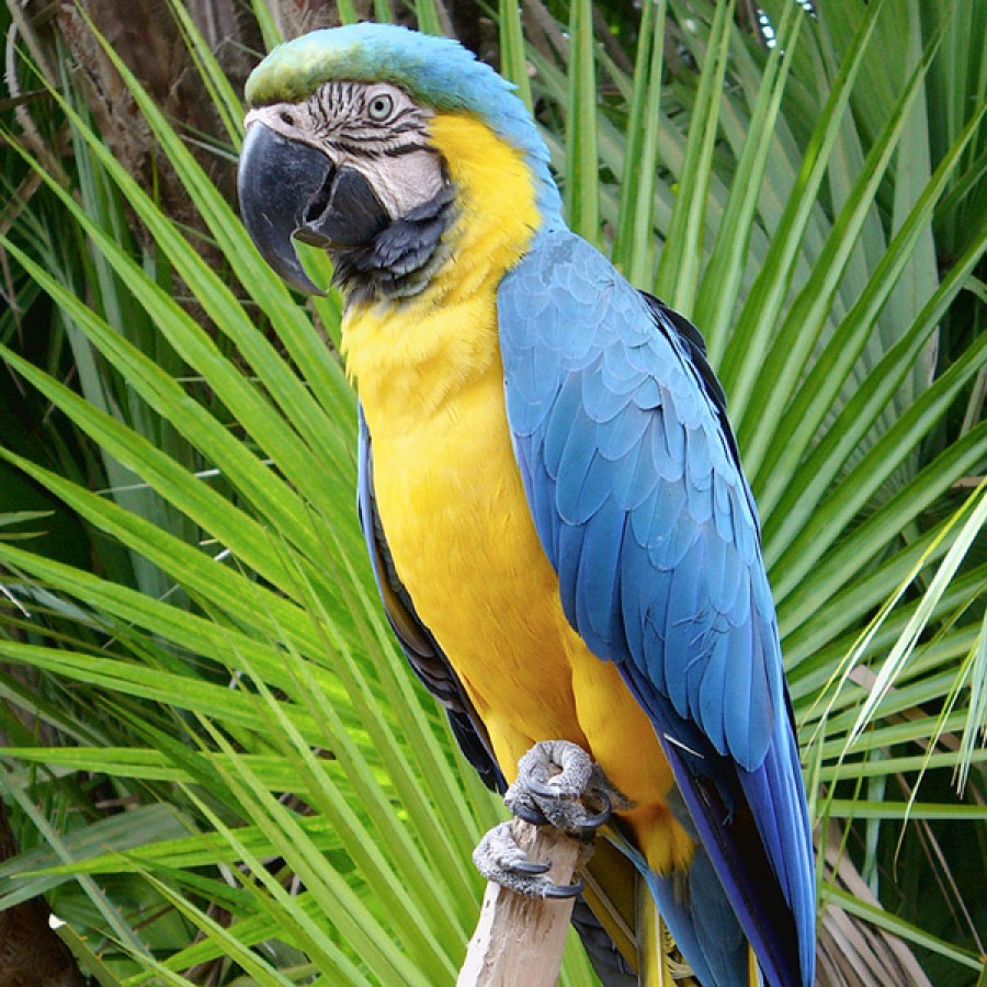 hand reared blue gold macaw babies the parrot place